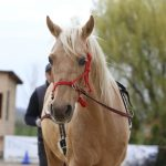 Az alapokon túl - kiegészítő lovasfelszerelések