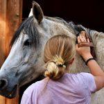 Fontos tudnivalók a lóápolásról és kellékeiről-térjünk rá a szőrök ápolására!