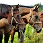 Fontos tudnivalók a lóápolásról és kellékeiről-a pataápolás jelentősége