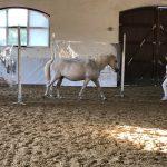 Élménybeszámoló a festmények és lovak - interaktív kiállításról