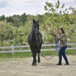 Hogyan beszélj a lovak nyelvén szavak nélkül!