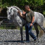 Free Horse Style alapképzés